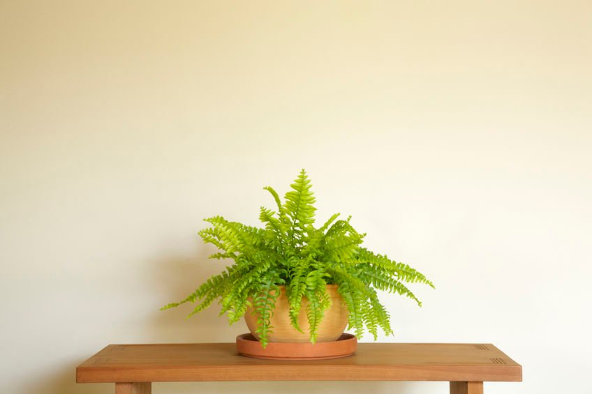 House Plant that Absorbs Moisture | Fritts Heat and Air