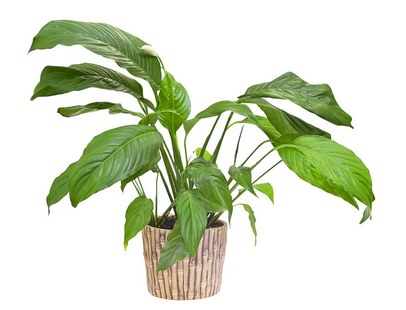Houseplants Reduce Humidity | Fritts Heating & Air
